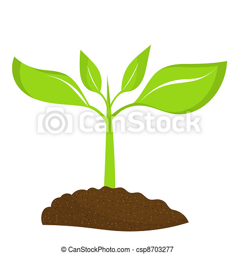 Young plant - Plant seedling Growing Plant Drawing