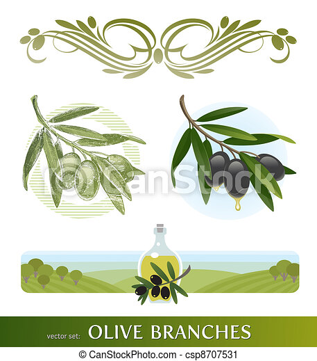 Vector set - olive branches - csp8707531