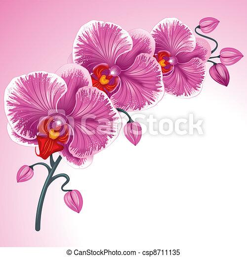 Vecteur Clipart de pourpre, orchidée - excellent, fond, à, réaliste ...