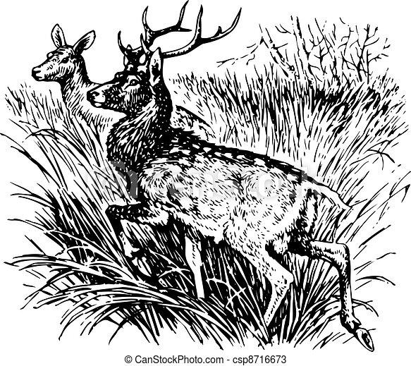 Deer cervus nippon - csp8716673