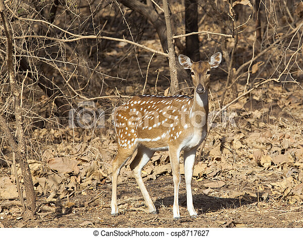 spotted deer - csp8717627