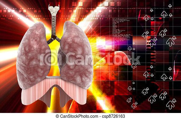 Human lungs  - csp8726163