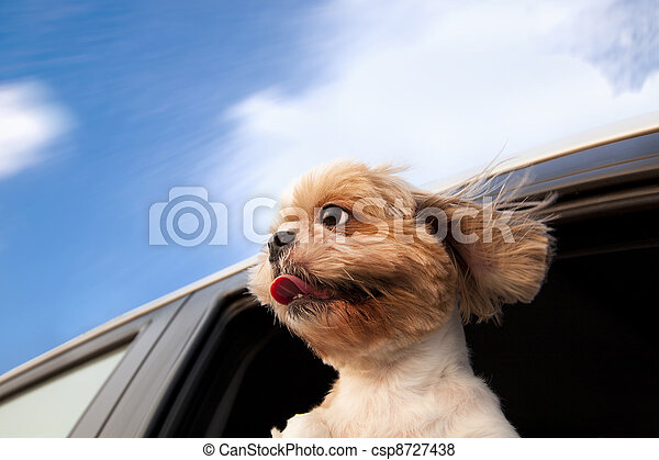 Dog in a Car Window and enjoy road trip - csp8727438