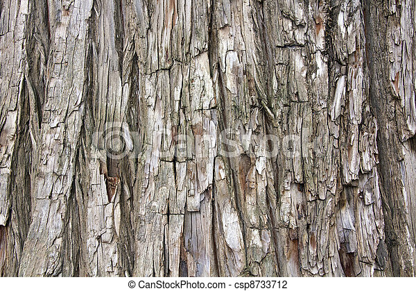 Detail of trunk of pine tree - csp8733712
