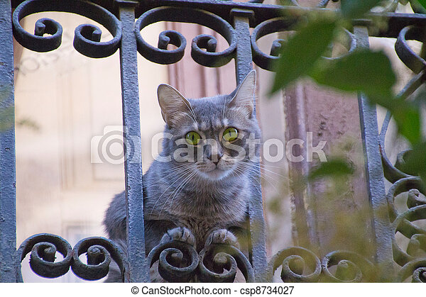 Cat large eyes showed to a balcony - csp8734027