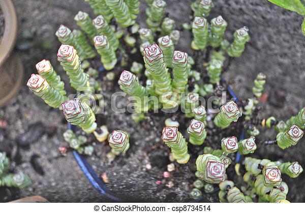 Photo de cactus fait mini jardin peu m nage plante - Comment congeler des haricots verts frais du jardin ...