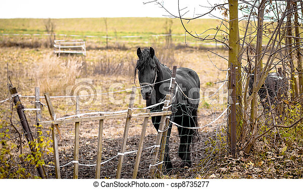 Skinny Horse outside in fenced yard area - csp8735277