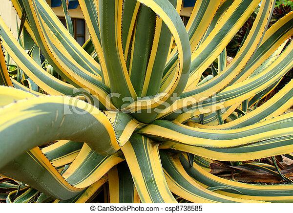 agave cactus plant - csp8738585