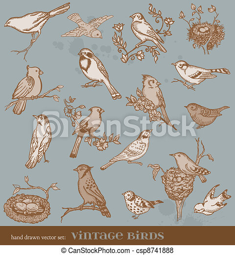 Hand drawn vector set: birds - variety of vintage bird illustrations - csp8741888
