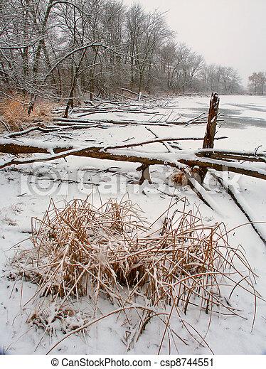 Lib Conservation Area Winter Scene - csp8744551