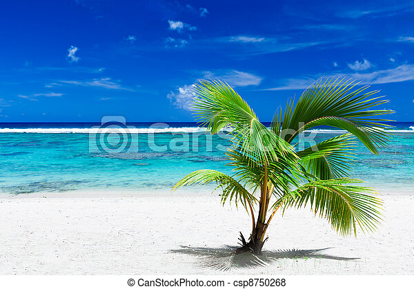 Small palm tree hanging over stunning blue lagoon - csp8750268