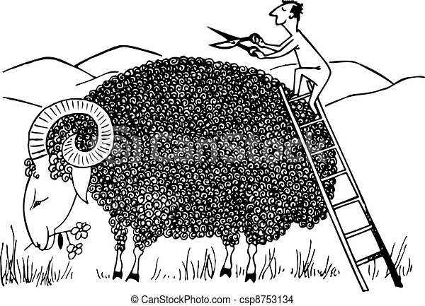 Sheep shearing - csp8753134