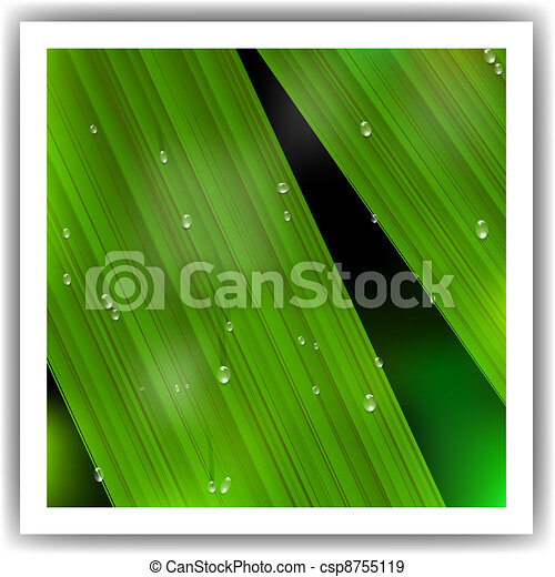 Macro Leaf with droplets - csp8755119