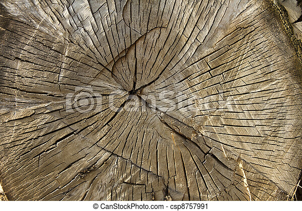 big tree intersection - csp8757991