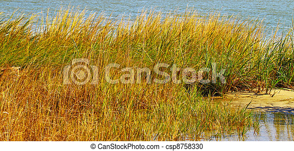 A bunch of Sea Grass growing along the shoreline of a beach at high tide during the summer. - csp8758330