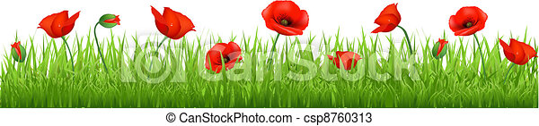 Red Poppy Border - csp8760313