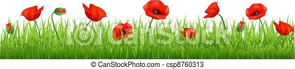 Red Poppy Border - csp8760313