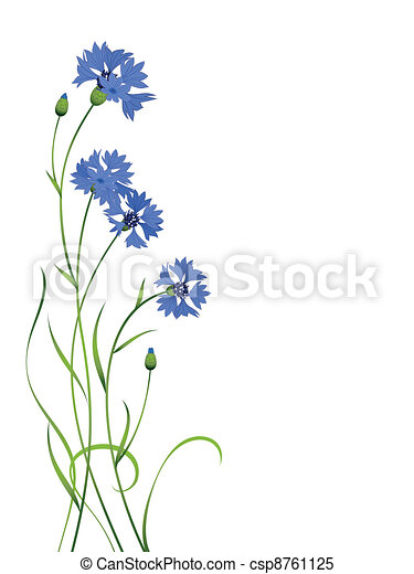 blue cornflower bouquet pattern isolated - csp8761125