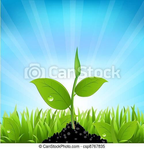 Beams And Grass - csp8767835