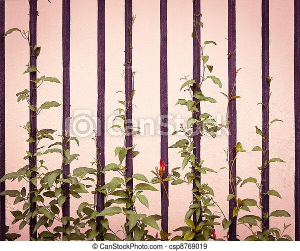 videira, planta, escalando, trilhos - csp8769019