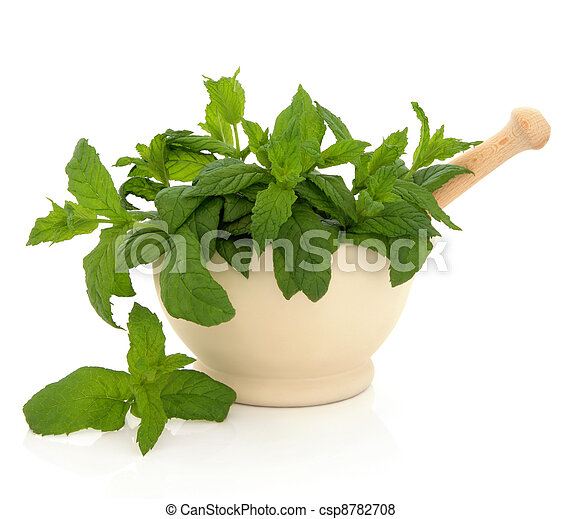 Mint Herb Leaves - csp8782708