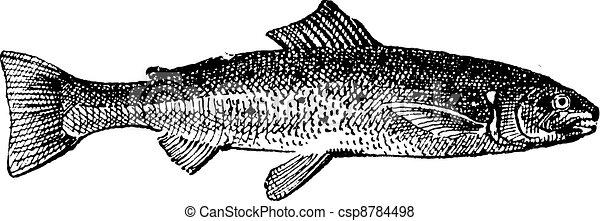 Salmon vintage engraving - csp8784498