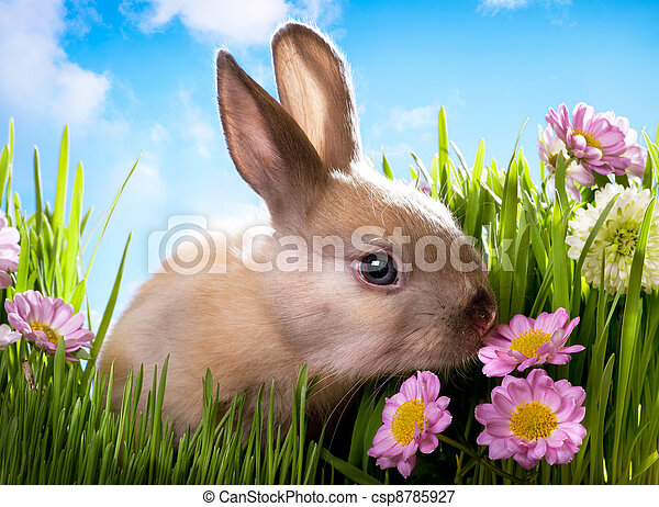 easter Baby rabbit on green grass with spring flowers - csp8785927