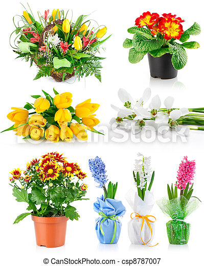set spring flowers with green leaves - csp8787007