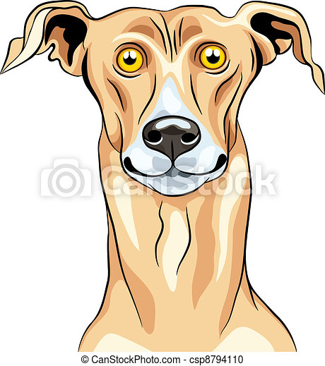 Vector Greyhound Dog breed smile - csp8794110