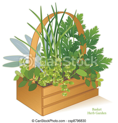 Herb Garden in Wood Basket - csp8796830