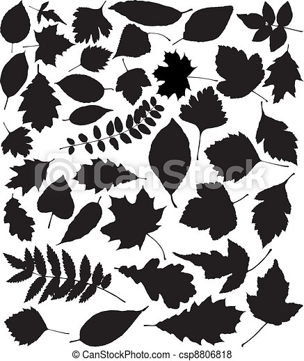 vector black silhouettes of leaves - csp8806818