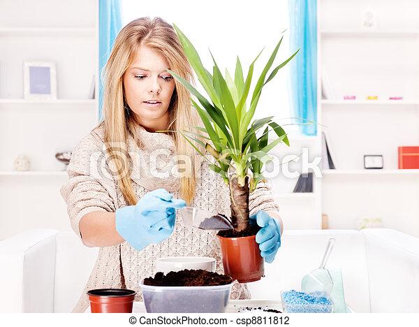 woman transplant plant in a bigger pot - csp8811812