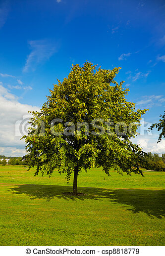 Lime tree in summer - csp8818779