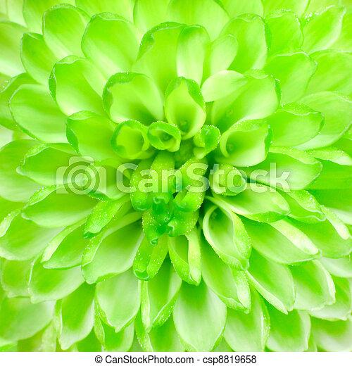 Lime Green Pom Pom Flower Square Background - csp8819658