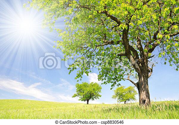 Spring landscape - csp8830546
