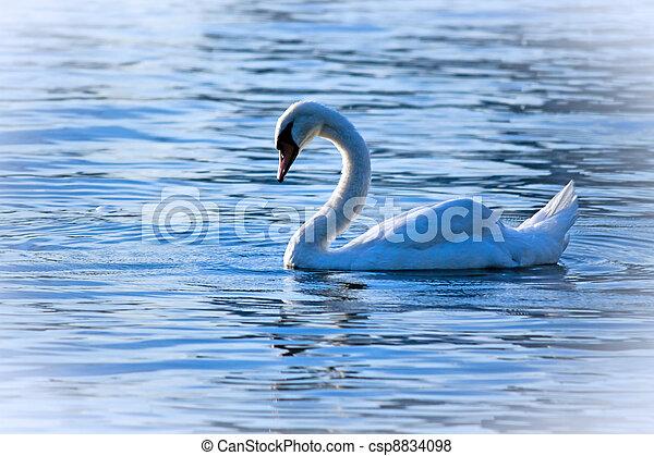 Swan Lake - csp8834098