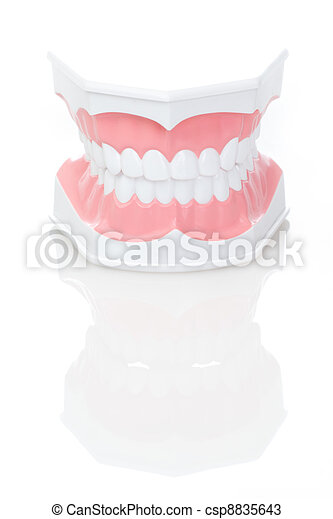 Dental Model of Teeth  - csp8835643