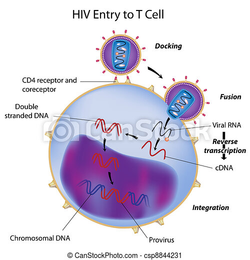HIV entry to T cell - csp8844231