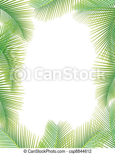 Leaves of palm tree on white - csp8844612
