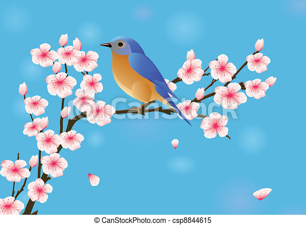 Cherry blossom with robin - csp8844615