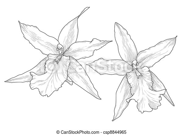 Orchid Line Drawings Orchid Csp8844965
