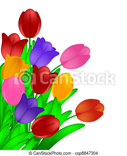 Bunch of Colorful Tulips Flowers Isolated on White Background - csp8847304