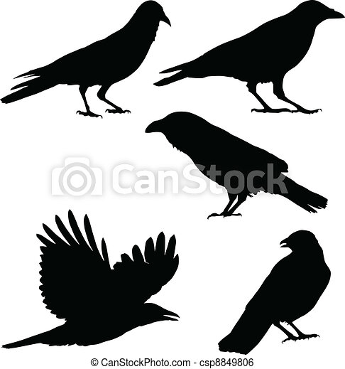 Set of vector images of crows - csp8849806