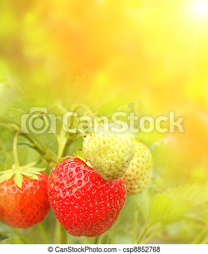 Strawberry - csp8852768
