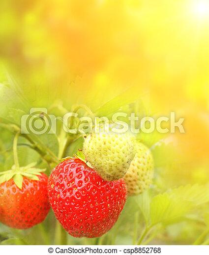 Strawberry - csp8852768