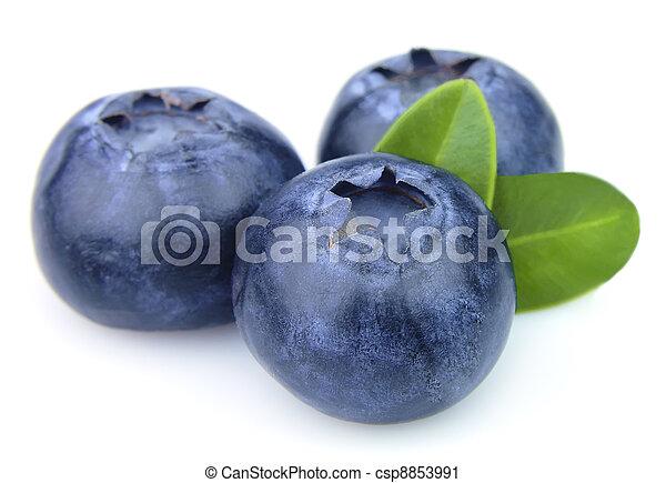 Blueberry closeup - csp8853991