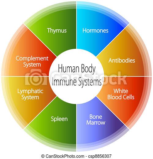 Human Body Immune Systems Chart - csp8856307