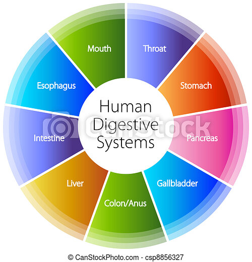 Human Digestive Systems - csp8856327