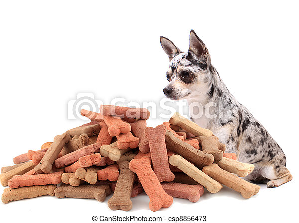 Pug and dog buiscuit treats - csp8856473