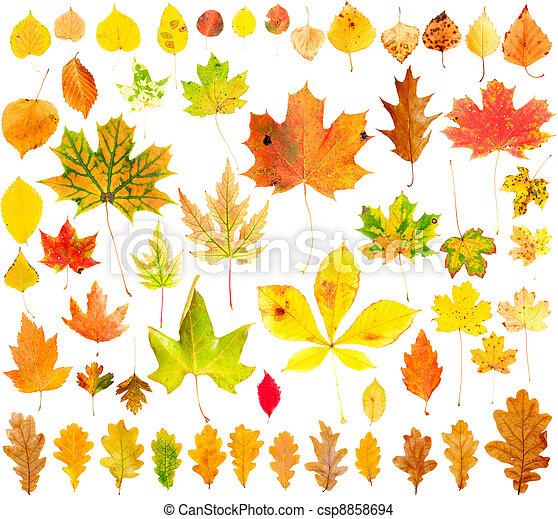 otoño, hojas, Colección - csp8858694